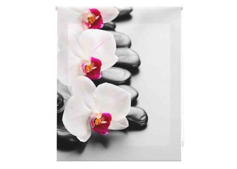 Orquídeas-blancas-zen-W-Z-81465