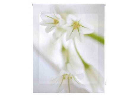 Orquideas-blancas-zen-Z-128020