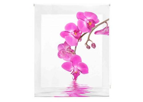 Orquideas-rosa-zen-Z-739344