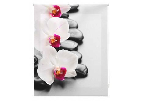 Orquideas blancas zen